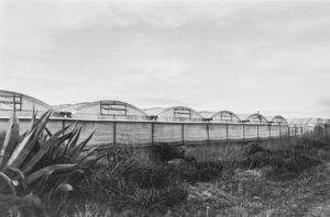 greenhouses in a row, black and white photo