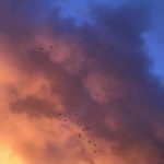 Intense sunset sky dotted with little blackbirds. Photo.